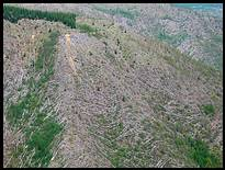 Mount St. Helens: downed trees