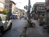 Kathmandu: livestock waiting in front of a Butcher's shop