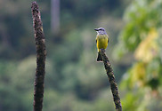 Manu National Park: bird